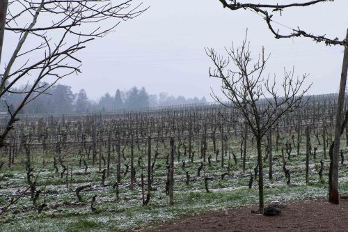 Snow in the Kühn vineyards March 2018-0131