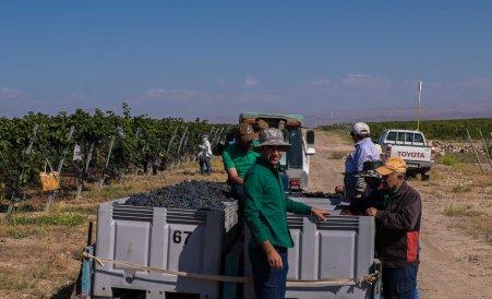 Karas Winery Harvest 2018