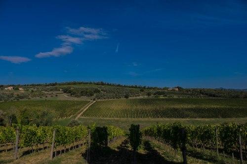 Felsina Berardenga's superb Rancia vineyard