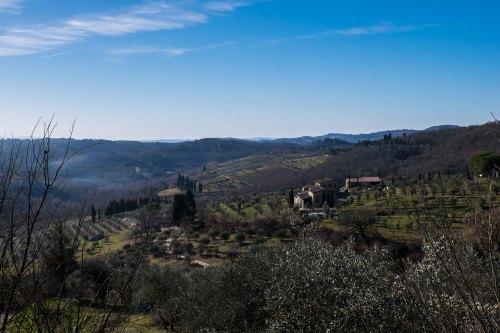 Vineyards in Radda