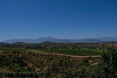 Errazuriz's Manzanares Vineyard, Aconcagua Costa