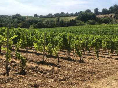 Organic Vineyards in Visan
